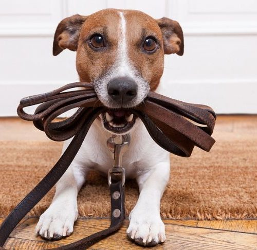 На административной комиссии вновь подняли проблему содержания домашних животных